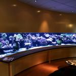 pieter-reef-aquarium