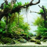 aquarium-3493-1286-wallpaper