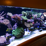 peter-reef-aquarium
